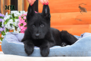 24_Puppies_Uragan_Furiya_ZETA