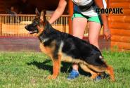 09_Puppies_Yam_Udachnaya_FLORANS