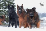 01_Winter_Dog