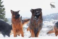 04_Winter_Dog