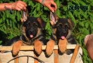 16_Puppies_Ux_Ichi_Girls