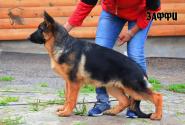 21_Puppies_Ux_Ichi_ZAFFI
