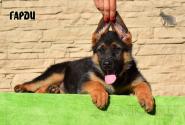 09_Puppies_Ux_Barrakuda_GARDI