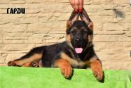 10_Puppies_Ux_Barrakuda_GARDI