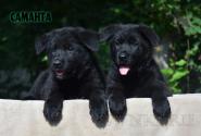 22_Puppies_Uragan_Avantura_SAMANTA