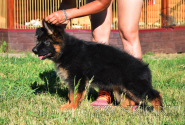 01_Puppies_Umaro_Indiya