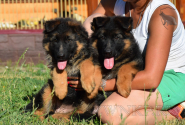 02_Puppies_Umaro_Indiya