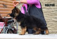 22_Puppies_Umaro_Kaora_OBERON