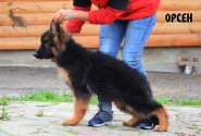 26_Puppies_Umaro_Kaora_ORSEN