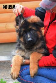 27_Puppies_Umaro_Kaora_OPIUM