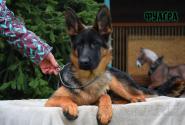 28_Puppies_Mac_Yuventa_FUAGRA