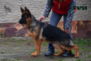 32_Puppies_Mac_Yuventa_FARIN