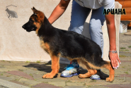 19_Puppies_Ekaraj_Yunita_ARIANA