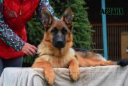 32_Puppies_Ekaraj_Yunita_ARIANA