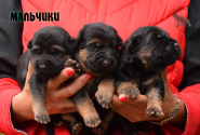 03_Puppies_Napoli_Barselona_Boys