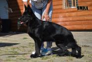 42_Puppies_Uragan_Etheri_UMKA