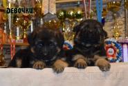 08_Puppies_Umaro_Yuksa_Girls