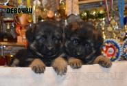 09_Puppies_Umaro_Yuksa_Girls