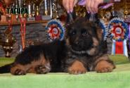 15_Puppies_Umaro_Yuksa_TAGIRA