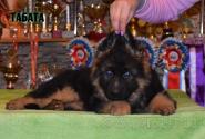 17_Puppies_Umaro_Yuksa_TABATA