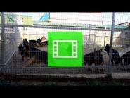 """In the German Shepherd Breeding Kennel """"Team Zilber Wasserfall"""""""