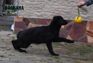01_Puppies_Uragan_Fleshka_VOLKANA