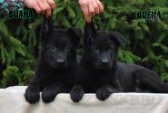 07_Puppies_Uragan_Fleshka_VIANA_VIENA