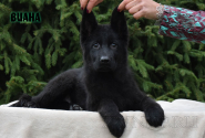 08_Puppies_Uragan_Fleshka_VIANA