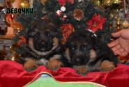 03_Puppies_Waiko_Ichi_Girls