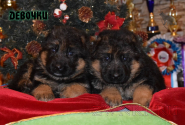 04_Puppies_Waiko_Ichi_Girls