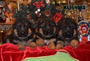 09_Puppies_Waiko_Ichi_Boys