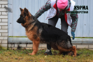 29_Puppies_Ekaraj_Bakara_HURMA_LH