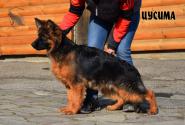 27_Puppies_Garry_Roxana_CUSIMA_LH