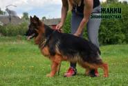 30_Puppies_Ekaraj_Zeyna_ZHAKKI_LH