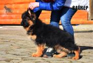 24_Puppies_Bacio_Bakkara_VAJKER