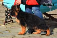 06_Puppies_Garry_Mishel_POLSHA
