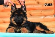 05_Puppies_Uragan_Barselona_SAYANA