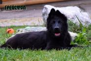 30_Puppies_Uragan_Yolka3_GREJSFOL_BL