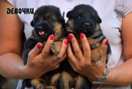 08_Puppies_Yamaguchi_Yunessa_GIRLS