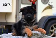 05_Puppies_Vest_Urma_LESTA