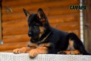 28_Puppies_Billy_Adriana_SAFARI