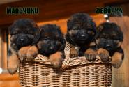 09_Puppies_Uragan_Raketa3_BG