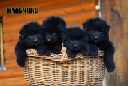 10_Puppies_Uragan_Raketa3_BOYS_BL