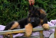 13_Puppies_Uragan_Raketa3_HAJD