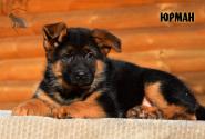 14_Puppies_Billy_Ferlanda_YURMAN