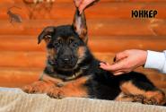 15_Puppies_Billy_Ferlanda_YUNKER
