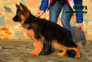 26_Puppies_JV_Nikita_FAJRA_LH
