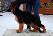 07_Puppies_Umaro_Cikuta_NISAN_LH