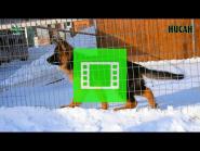 10_Puppies_Umaro_Cikuta_NISAN_VIDEO
