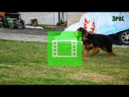 Team Zilber Wasserfall EROS / Video /